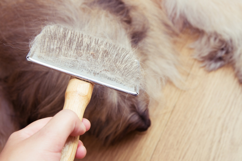 Brush with dogs fur