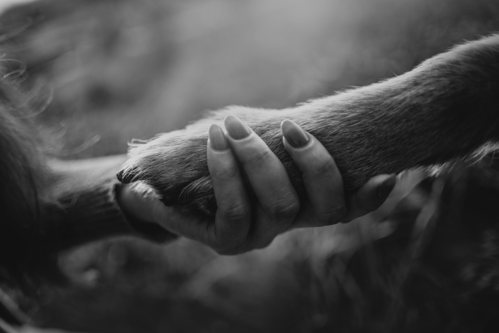 owner holding her dogs paw close up